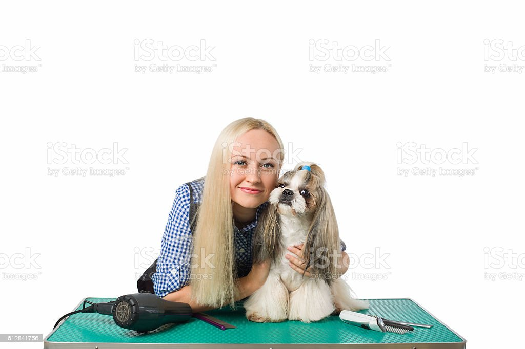 Woman groomer with funny and cute shih-tzu dog stock photo