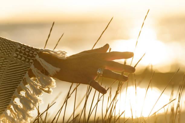 Woman hand caressing grass stock photo