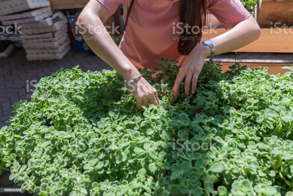 Woman hand chosing the plant pot carefully in the garden stock photo