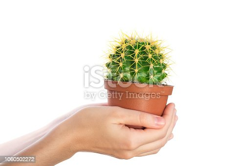Woman hand hold cactus in brown pot on white background isolate