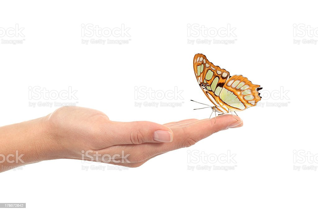 Woman hand holding a beautiful butterfly stock photo