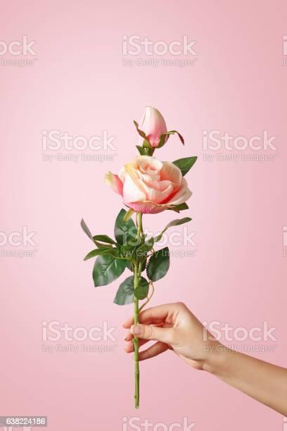 Woman hand holding a rose on pastel background picture id638224186?b=1&k=6&m=638224186&s=612x612&h=qaionsjtnrtnean38dlziendldg4sqlw8tabdcxhhj8=