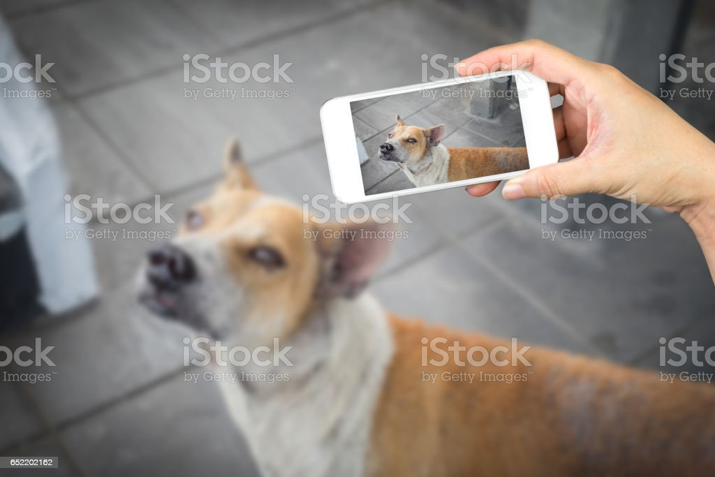 woman hand holding and using mobile,cell phone,smart phone photography and a stray dog on concrete floor. stock photo