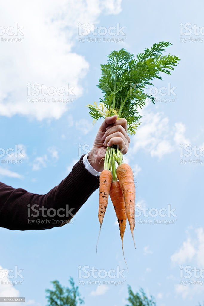 Woman hand holding bunch of fresh carrots against sky background.