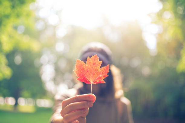 woman hand holding red maple leaf in a canadian park - canada stock photos and pictures