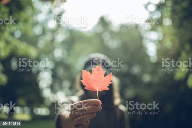 Photo of Woman Hand Holding Red Maple Leaf in a Canadian park