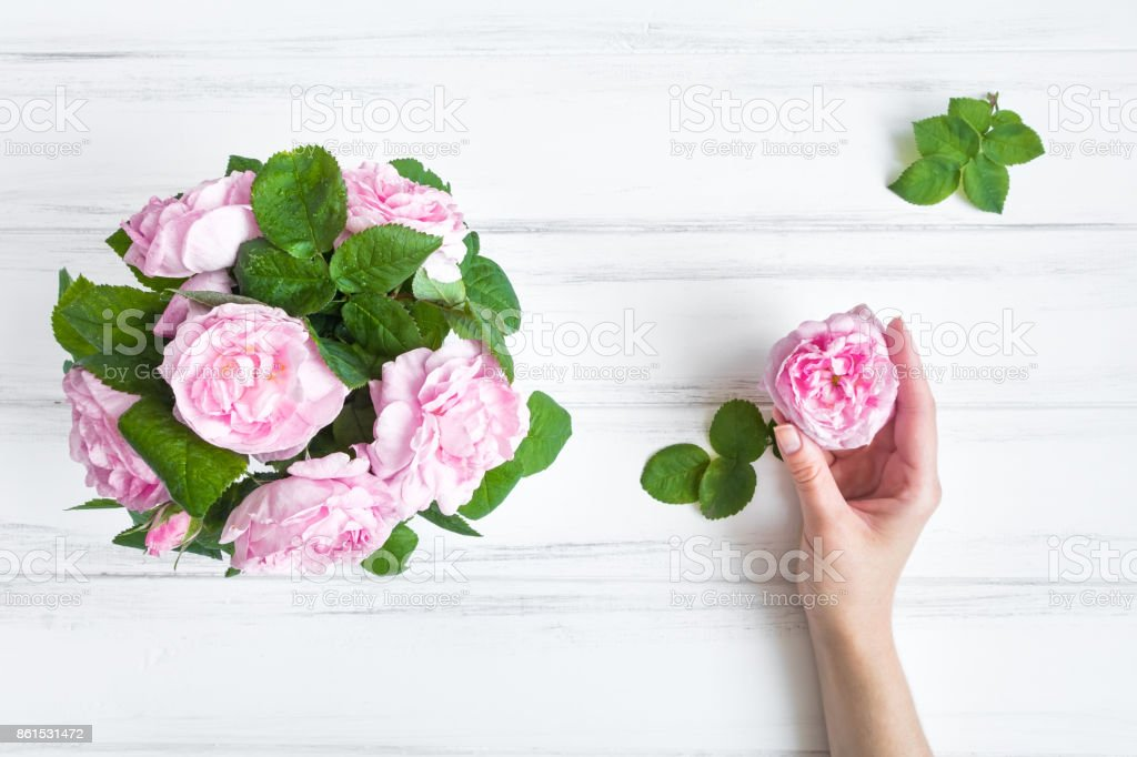 Woman hand holding rose head, with rose flowers in a vase against white vintage wooden table. Flat lay, top view stock photo