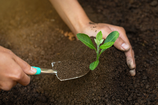 912882270 istock photo Woman hand holding soil, planting and caring for seedlings The concept of World Environment Day, take care of seedlings to grow, conserve the world, plant trees to reduce global warming. 1248066244