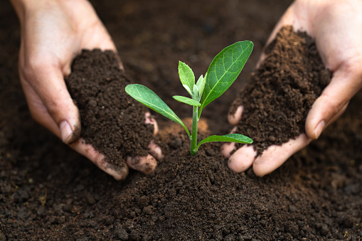 912882270 istock photo Woman hand holding soil, planting and caring for seedlings The concept of World Environment Day, take care of seedlings to grow, conserve the world, plant trees to reduce global warming. 1248066248