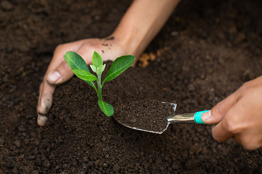 912882270 istock photo Woman hand holding soil, planting and caring for seedlings The concept of World Environment Day, take care of seedlings to grow, conserve the world, plant trees to reduce global warming. 1248739714