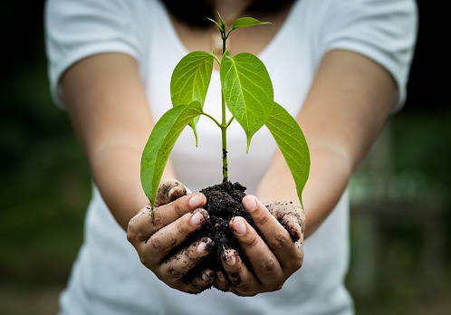 486530452 istock photo Woman hand holding  young tree in soil 488109344