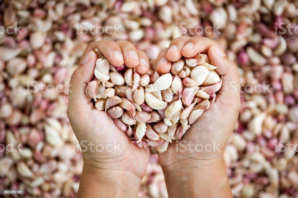 Mão de mulher fazem coração forma segurando o alho fresco - foto de acervo