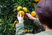 Happy mid adult women vlogging in orange garden.