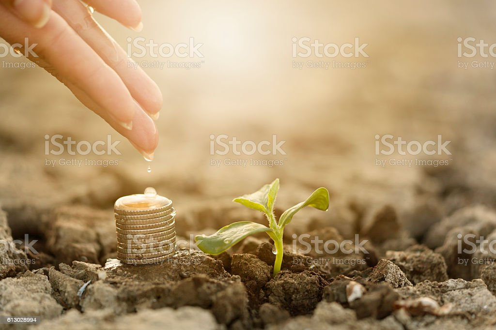 Woman hand putting money in soil stock photo