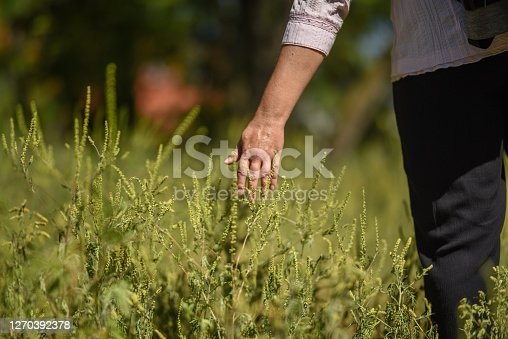 Close up of woman hand touching plants and herbs in a field