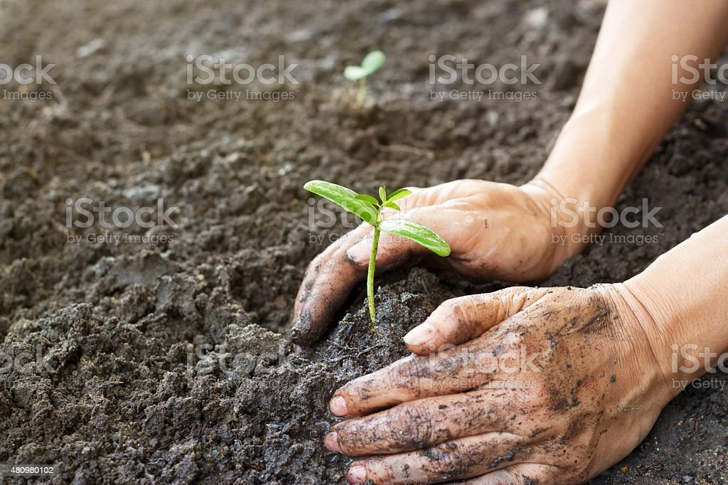 Woman hand watering and protect young tree on soil background stock photo