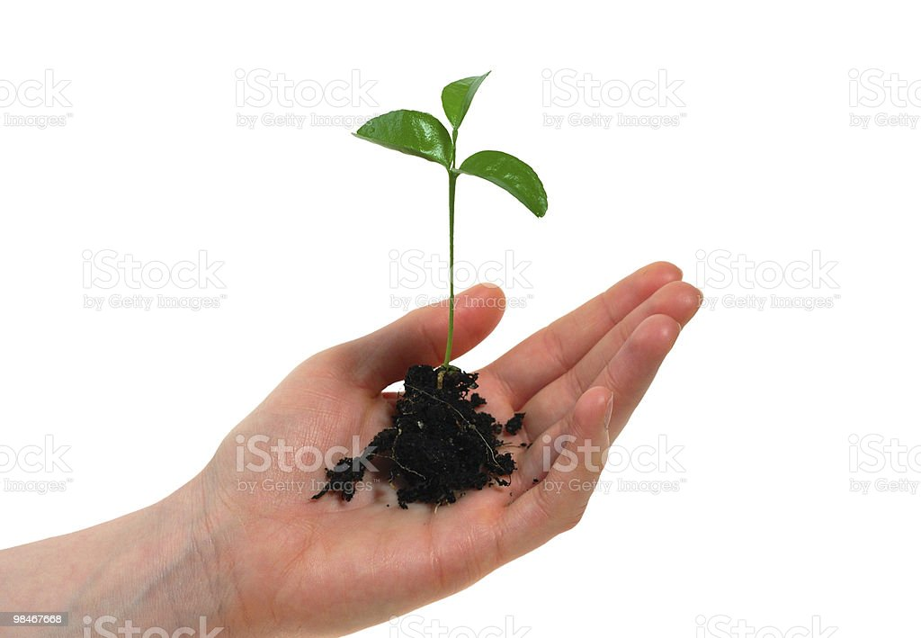 Woman hand with a plant royalty-free stock photo