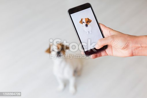 Woman hand with mobile smart phone taking a photo of a cute small dog over white background. Happy dog looking at the camera. Indoors portrait