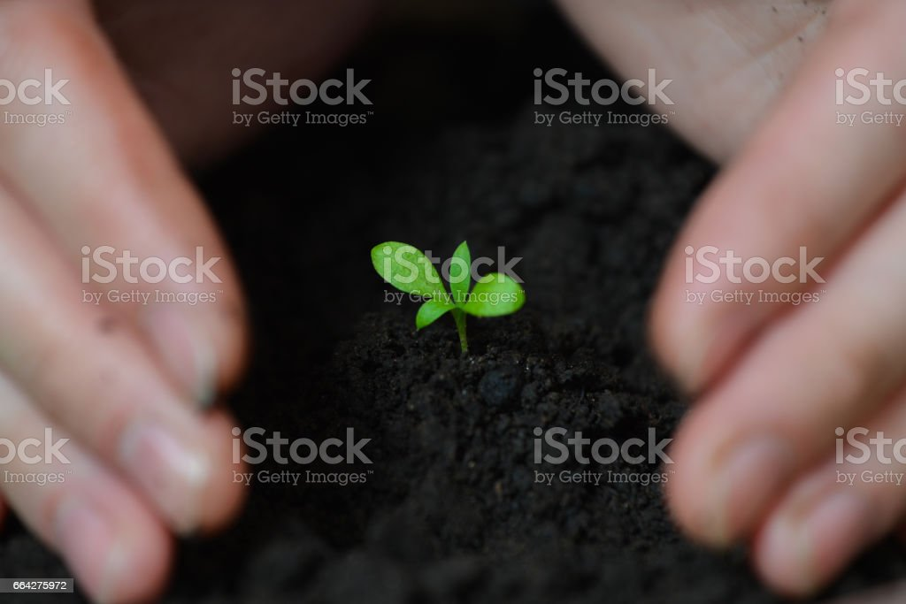 Manos de mujer están sembrando las plántulas en el concepto de suelo, ecología y tierra día - foto de stock