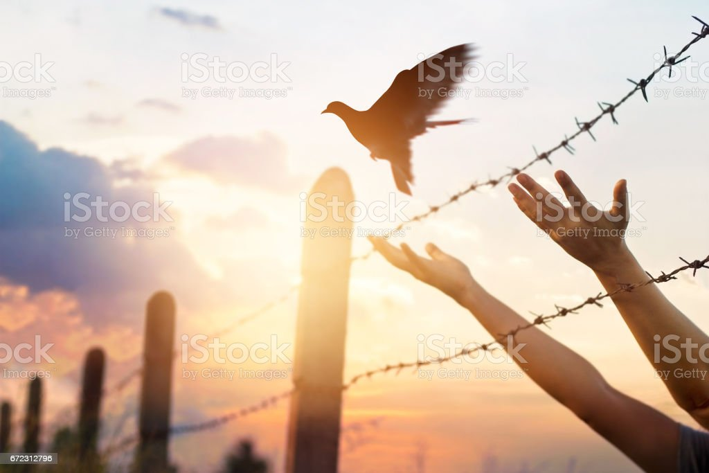 Woman hands frees the bird above a wire fence barbed stock photo