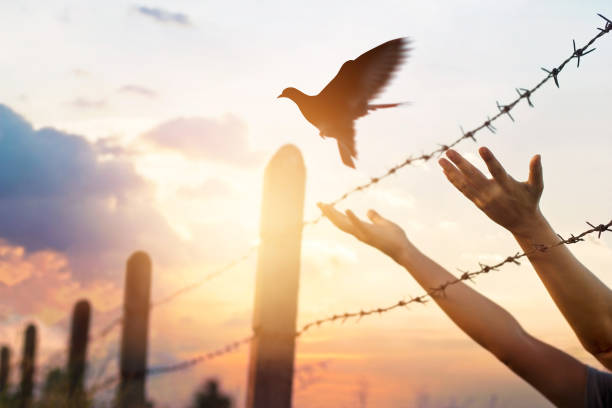 frau hände befreit den vogel über einen zaun mit stacheldraht - religionsfreiheit stock-fotos und bilder