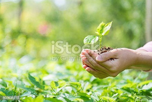 Woman hands holding a small green plant.