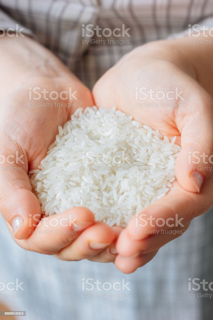 Woman hands holding a white rice. stock photo