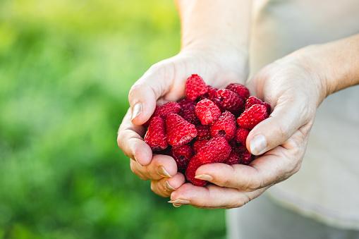 Woman hands holding fresh red raspberries