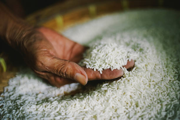 woman hands holding rice for survival woman hands holding rice for survival handful stock pictures, royalty-free photos & images