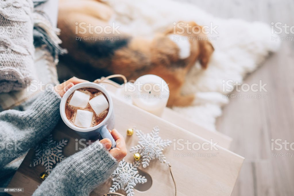 Woman hands ith cup of hot chocolate close up image, cozy home, sleeping dog, christmas time stock photo