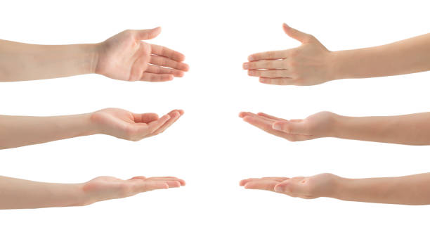 Woman Hands Set , isolated stock photo