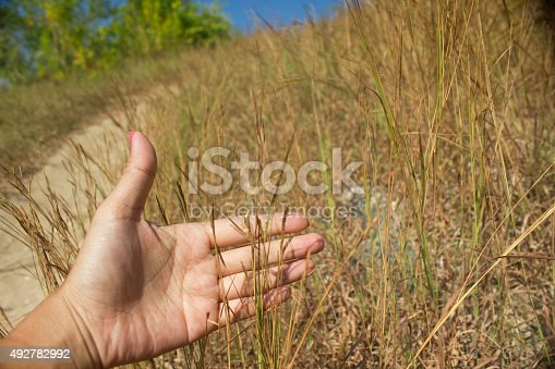 Woman hands showing grass in the meadow. The woman hands has a pink color nail polish.  The background is a blue sky with a green tree and a pathway to walk. The picture taken outdoor in the outdoor field.
