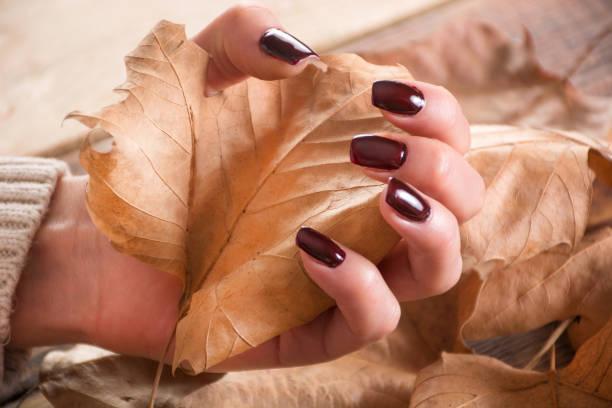 frau hände mit braunen gel-nägel hält polnisch trocken fallen leaf auf holz und blätter - herbst nagellack stock-fotos und bilder