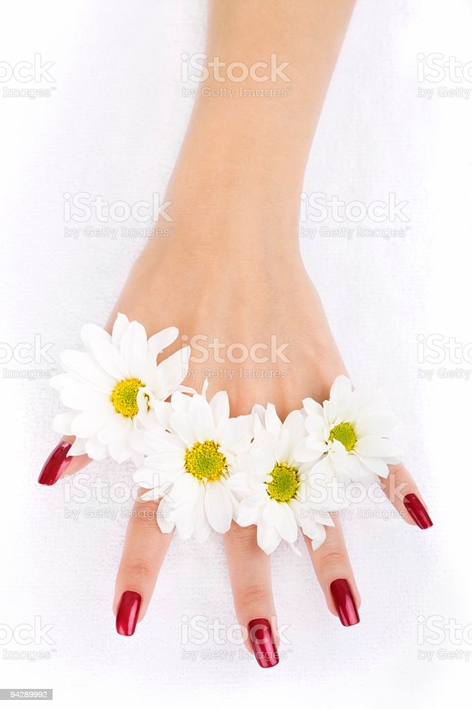 Woman hands with camomiles royalty-free stock photo