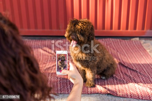 636418612 istock photo Woman hands with mobile smart phone taking a photo of Spanish water dog over red background. Happy dog. Outdoors portrait 672459676