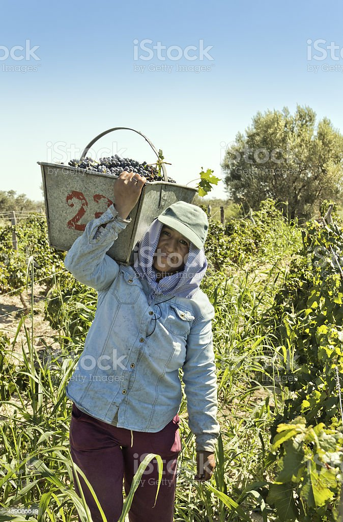 Woman harvester stock photo