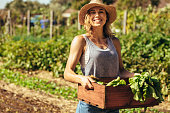 istock Woman harvesting fresh vegetables from her farm 1050799760
