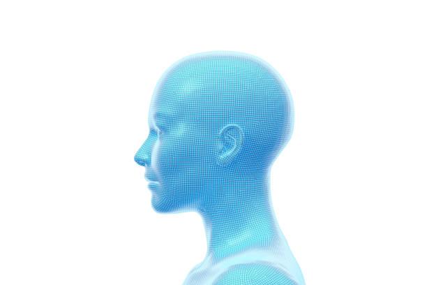 Woman, Head of Female Human, 3D Illustration stock photo