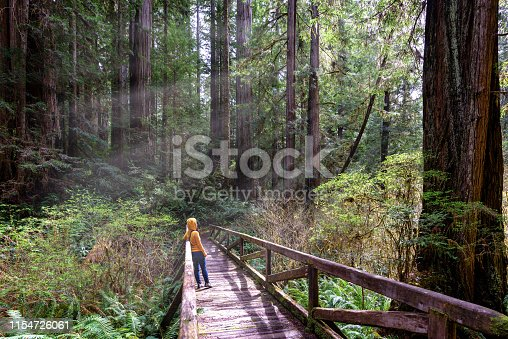 Woman hiker explores  Redwood National Park California