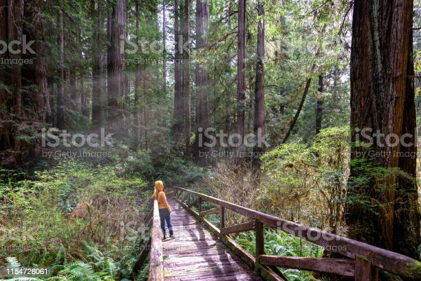 Photo of Woman hiker explores  Redwood National Park California