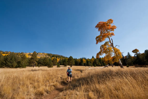 Woman Hiker on the Arizona Trail stock photo