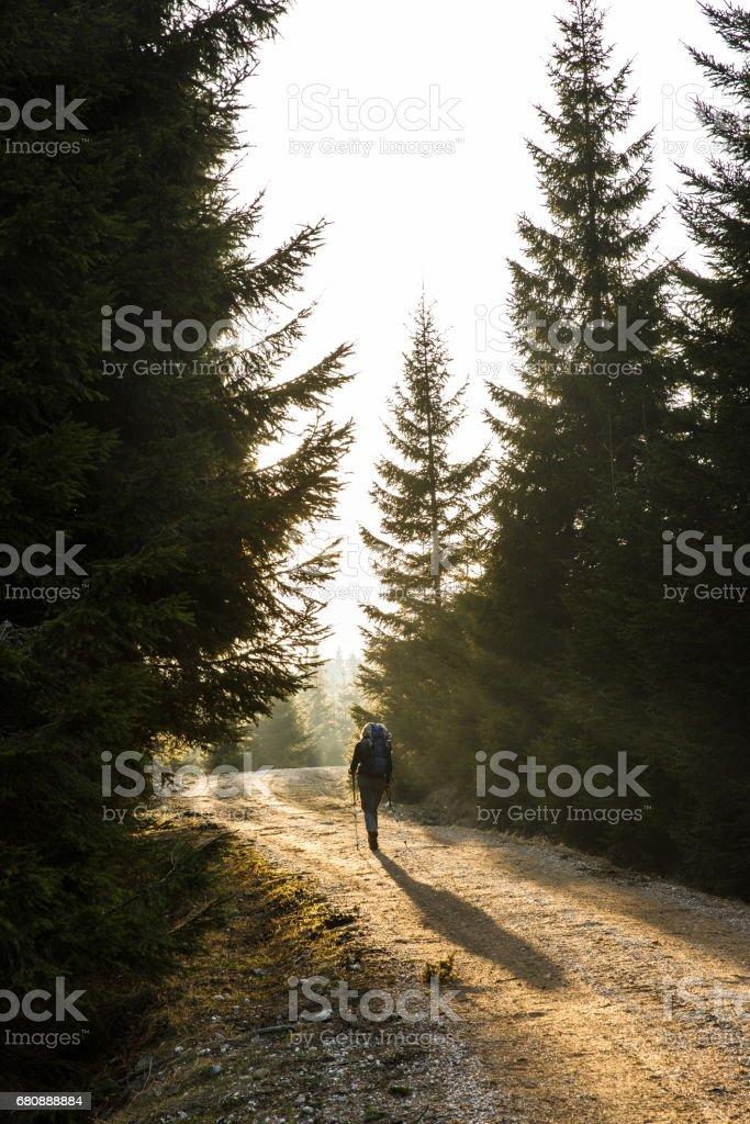 Woman hiker walking on a mountain road, sun shining royalty-free stock photo