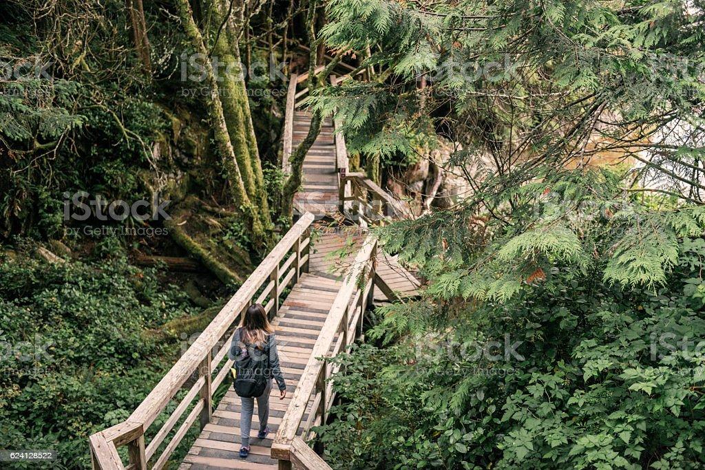 Woman Hiking Green Rainforest Tofino National Park Vancouver Island Canada stock photo