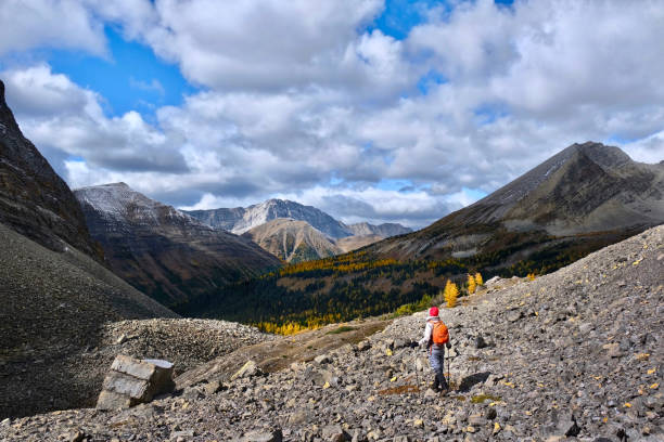 Woman hiking in mountains in Canadian Rockies among picturesque peaks and yellow autumn trees. stock photo