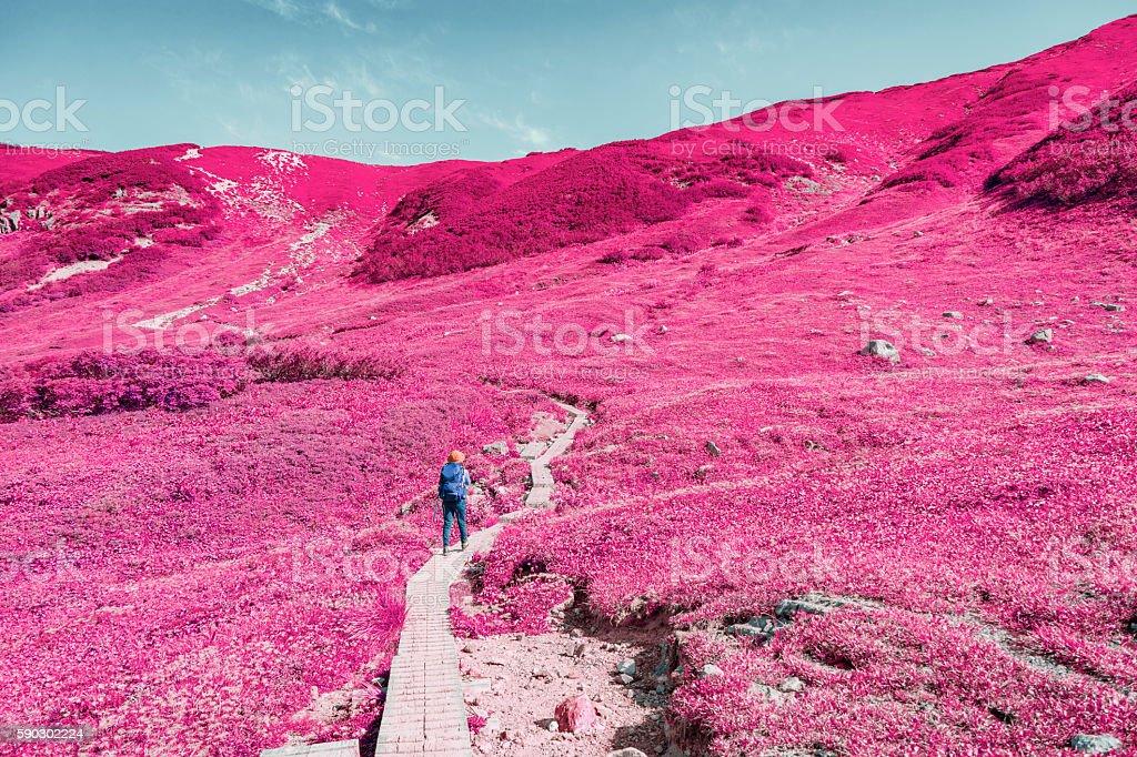 Woman hiking in Okudainichidake,Japan Стоковые фото Стоковая фотография