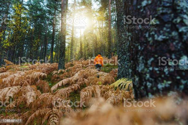 Photo of Woman hiking outdoors in forest and ferns: autumn leaf foliage