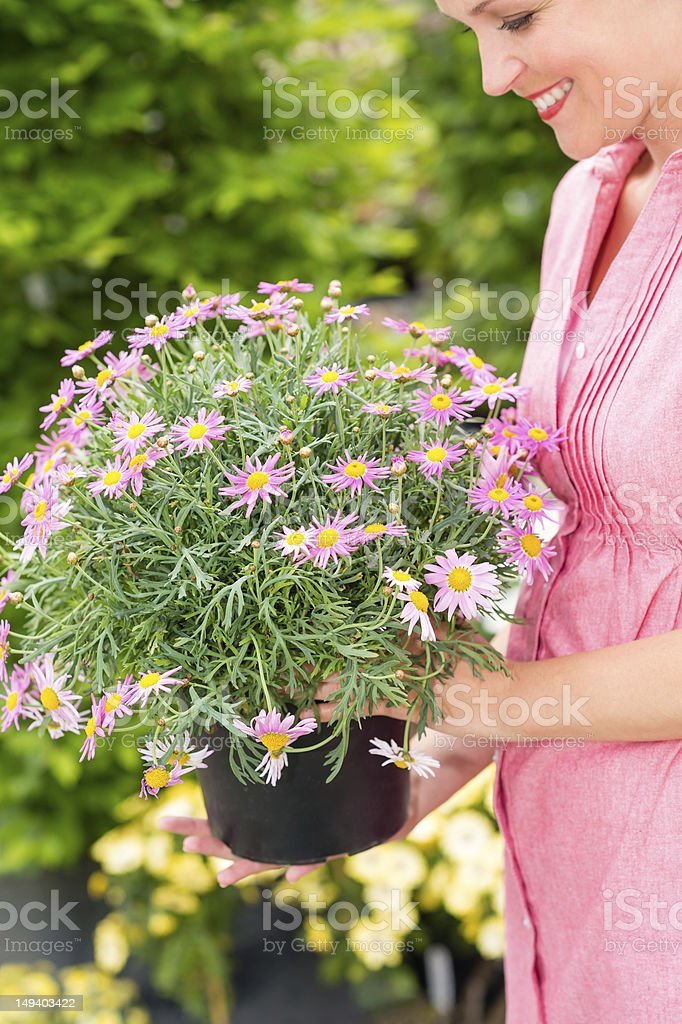 Woman hold potted daisy flower garden centre royalty-free stock photo