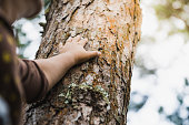istock Woman hold the tree 1188406550