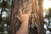 istock Woman hold the tree 1188406556