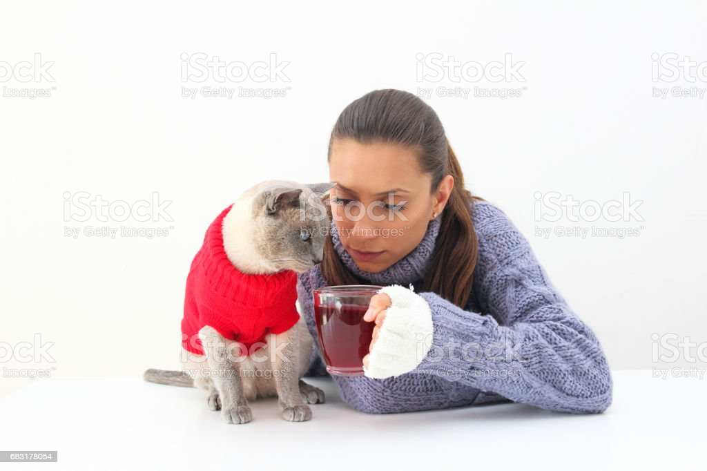 A woman holding a cup of red tea wears a purple sweater and white gloves with a Siamese cat wearing a red sweater 免版稅 stock photo